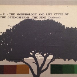 The Morphology and lyfe cycle of the Gymnosperms,  The Pine, 2012